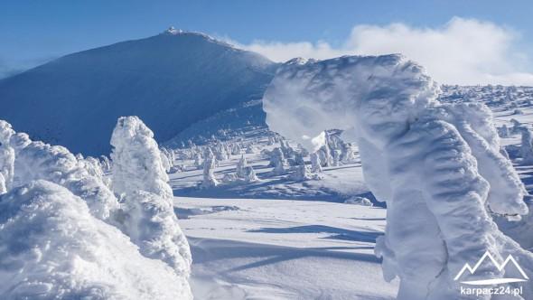 Śnieżka w w zimowej aurze