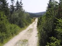 Droga z Jakuszyc do Schroniska Orle