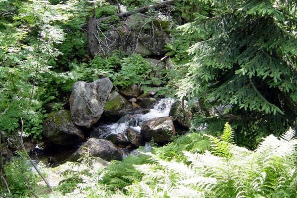 Dziki potok.