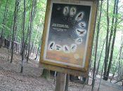 Leśny Park Niespodzianek