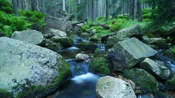 Leśny potok w okolicach Karpacza