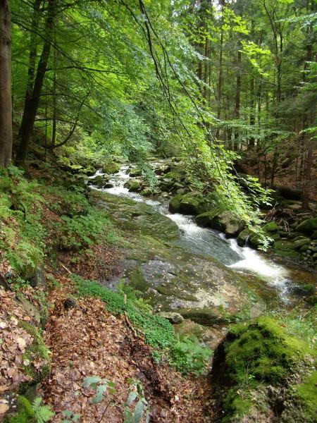 Potok w Karkonoszach