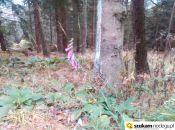 9 listopada a kwiaty wciąż rosną w Rudawych Janowickich